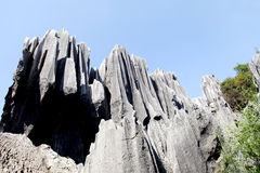 Kunming Stone Forest Park Royalty Free Stock Images