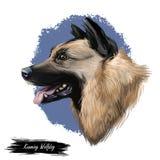 Kunming-wolfdog, Hund stammte aus China, digitale Kunstillustration Chinese gebildete Zucht, ausgebildet als Militär lizenzfreie abbildung