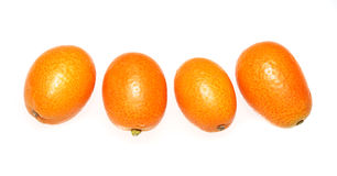 Kunquats. Four Orange Kumquats in a line Stock Photography