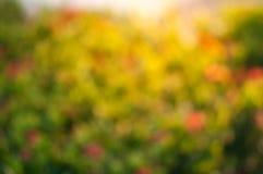 Kunst bloemenachtergrond, aardsamenvatting Roze magnolia in bloei in licht van de ochtend het purpere zon Gestemde foto Stock Afbeelding