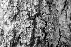 Kunst des Holzes Stockbilder