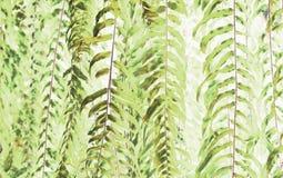 Kunst des schönen grünen Farns lässt Gebrauch für abstraktes Bild lizenzfreies stockfoto