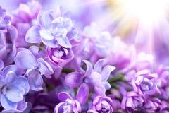 Kunst-Designhintergrund des Fliederblumenbündels violetter Stockfotos