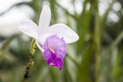 Kunst einer Blume Stockfotografie