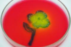 Kunst van Kolonie van bacteriën in de plaat van het cultuurmiddel stock foto