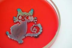 Kunst von der Kolonie von Bakterien in der Kulturmediumplatte stockbild