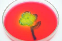 Kunst von der Kolonie von Bakterien in der Kulturmediumplatte lizenzfreie stockfotos