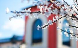 Kunstbloemen als achtergrond op de boom Royalty-vrije Stock Afbeeldingen