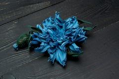 Kunstbloemen van gekleurd leer worden gemaakt dat royalty-vrije stock afbeelding