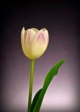 Kunstblume Stockbild