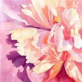 Kunstblumenaquarell-Rosapfingstrosen Stockfotografie