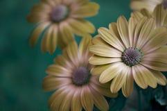 Kunstfrühlingsblumen Stockfotos