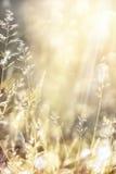 Kunstherbst-Naturhintergrund Stockfotos