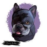 Kunstillustration der Hunderasse der französischen Bulldogge digitale lokalisiert auf Weiß Populäres Welpenporträt mit Text Nette lizenzfreie abbildung