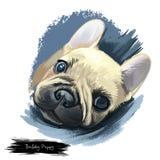 Kunstillustration des britischen Porträts des Bulldoggenwelpen digitale Hunde stock abbildung