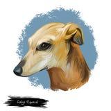 Kunstillustration Hunderasse Galgo Espanol digitale lokalisiert auf Weiß Populäres Welpenporträt mit Text Nette Haustierhand stock abbildung