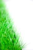 Kunstmatig gras Royalty-vrije Stock Afbeelding
