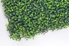 Kunstmatig gras Stock Fotografie