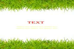 Kunstmatig groen gras Stock Foto