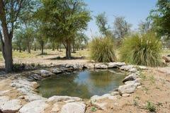 Kunstmatig klein meer bij oase in de woestijn die door bomen en struiken wordt omringd royalty-vrije stock fotografie