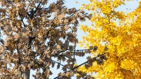 Kunstmatige esdoornboom Stock Foto
