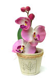 Kunstmatige orchidee Royalty-vrije Stock Fotografie