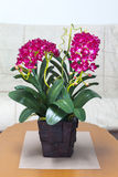 Kunstmatige orchideebloem Royalty-vrije Stock Fotografie