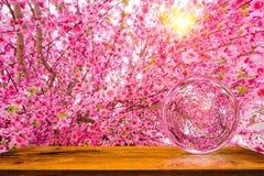 Kunstmatige Sakura bloeit of kersenbloesems en het effect van de glasbal Houten lijst met het effect van de zonverlichting Stock Foto