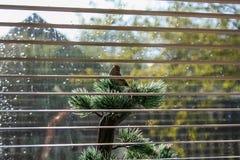 Kunstmatige vogel Stock Foto