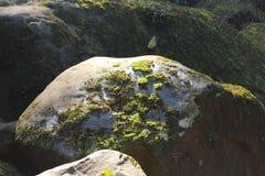 Kunststeen in het regenwoud stock foto's