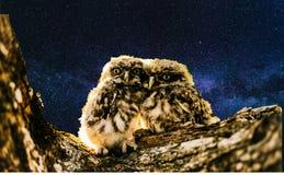 Kunstwerk van uilen royalty-vrije stock fotografie