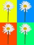 Kunstzusammensetzung, das Gänseblümchen, das in vier lokalisiert wurde, färbte Hintergrund Stockbild
