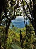 Kunt u door de bomen zien Stock Afbeelding