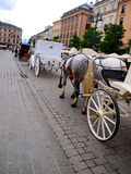 Kuperu i ogonu galonowy szary koń Obraz Royalty Free