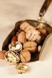 Kupferne Schaufel mit Herbstmuttern lizenzfreies stockbild