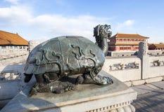 Kupferne Schildkröte Lizenzfreie Stockbilder