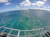 Kupferner Haifisch vor einem Käfig stockfotos