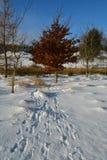 Kupfernes beack im Schnee Rebhuhnsuperlandstraße Stockfotos