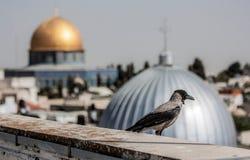 Kupolen av vaggar, Jerusalem royaltyfri fotografi
