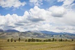 Kurai steppe. Altai mountain summer landscape Royalty Free Stock Image