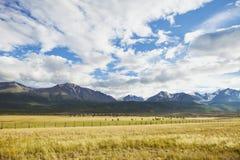 Kurai steppe. Altai mountain summer landscape. Russia Stock Photos
