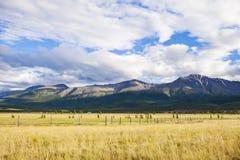 Kurai steppe. Mountain Altai nature. Summer landscape. Russia Stock Image