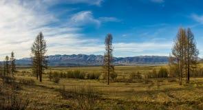 Kuraisteppe en zijn omringende bergen met sneeuwpieken, Altai, Rusland stock fotografie