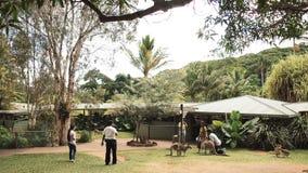 Kuranda koalaträdgårdar, Queensland, Australien arkivfoto