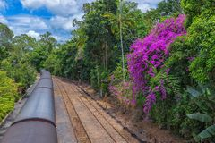 The Kuranda Railway is a very popular tourist attraction in the tropical north of Queensland Australia. Scenic railway Kuranda on the background of flowering stock photos