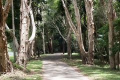 Kuranda Village Tree lined trails. One of the trails in Kuranda village, sidewalk lined with tall trees and green grass royalty free stock photo