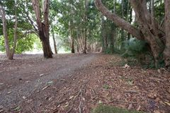 Kuranda Village Tree lined trails. One of the trails in Kuranda village, sidewalk lined with tall trees and green grass royalty free stock photos