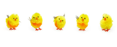 kurczątek ślicznej dekoraci Easter sezonowy kolor żółty Obrazy Royalty Free
