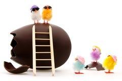 kurczątka czyścić Easter Obraz Stock