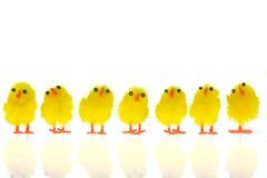 kurczątka Easter obraz stock
